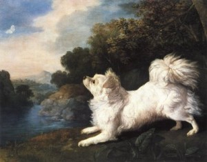 Spanish Dog belonging to Mr Cosway chasing a Butterfly by George Stubbs, 1775
