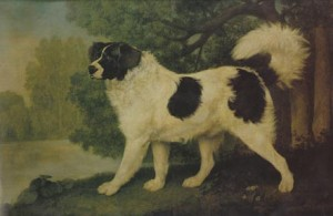 Portrait of a New Foundland dog by George Stubbs, 1803