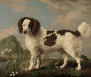 Brown and White Norfolk or Water Spaniel by Stubbs, 1778